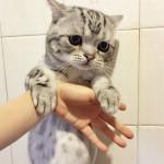 Luhu-the-saddest-tabby-cat (1)