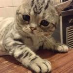 Luhu-the-saddest-tabby-cat (2)