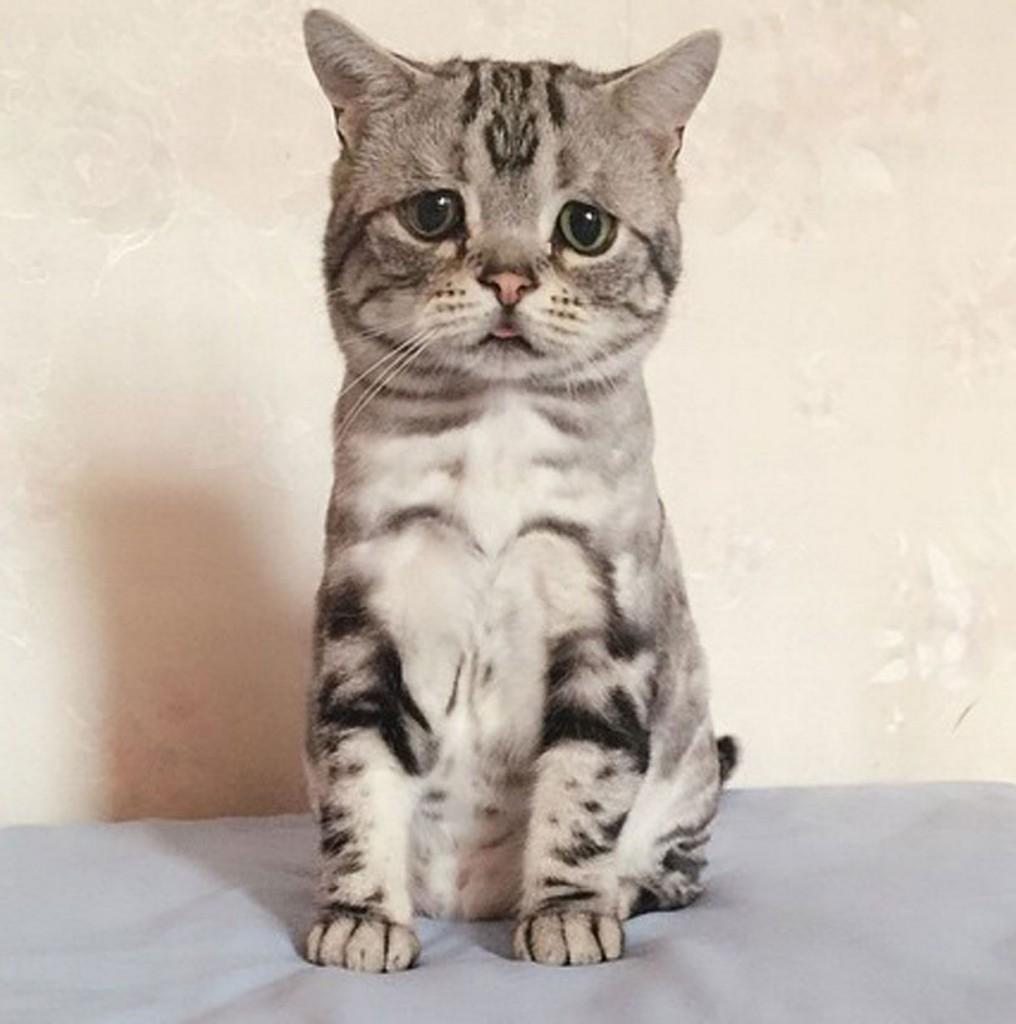 Luhu-the-saddest-tabby-cat (8)