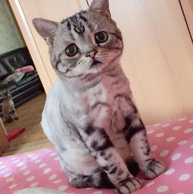 Luhu-the-saddest-tabby-cat (9)