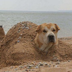 dog_buried2