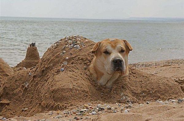 dog_buried2