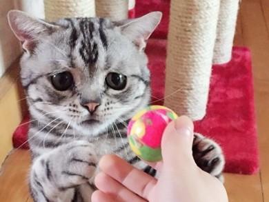 o-SAD-CAT-facebook