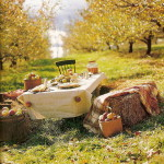 red-and-yellow-apples-as-home-decor-autumn2