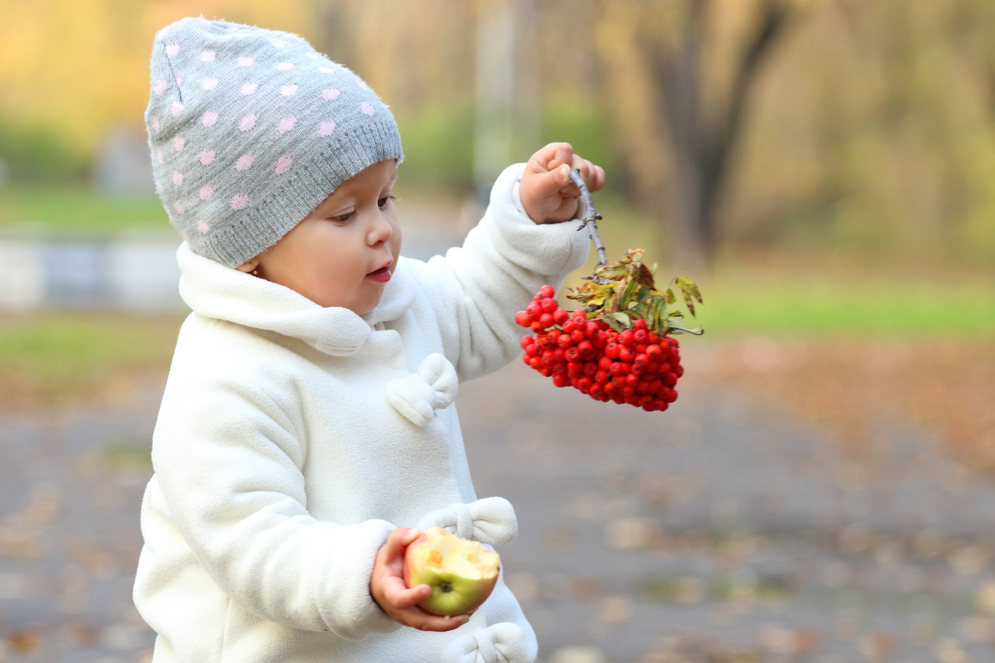 Little cute girl in white holds apple and rowanberry in autumn park