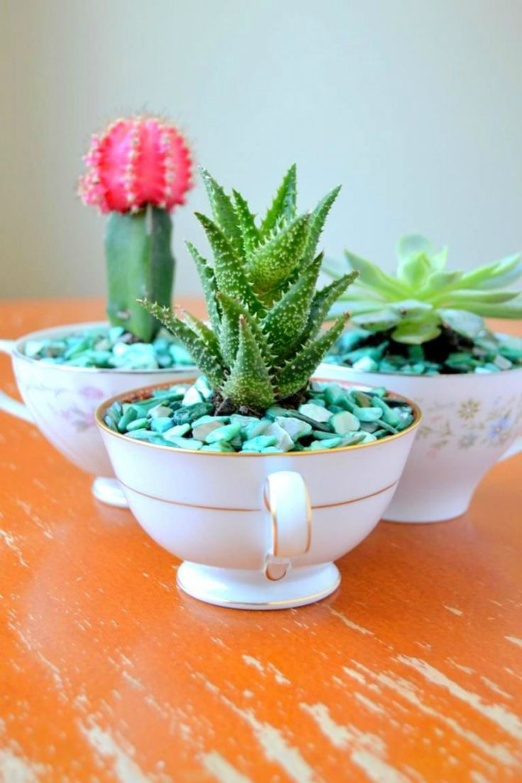 revamp-vintage-teacups-with-this-easy-maintenance-diy-idea-crazy-for-cacti-all-you-need-are-small-pebbles-cactus-soil-and-decorative-aquarium-rocks
