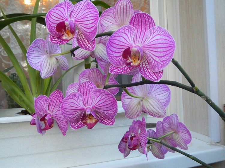 1478290414_orhidei-1
