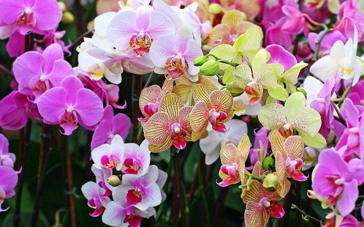 1478290437_orhidei-2