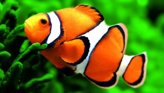 zivis1