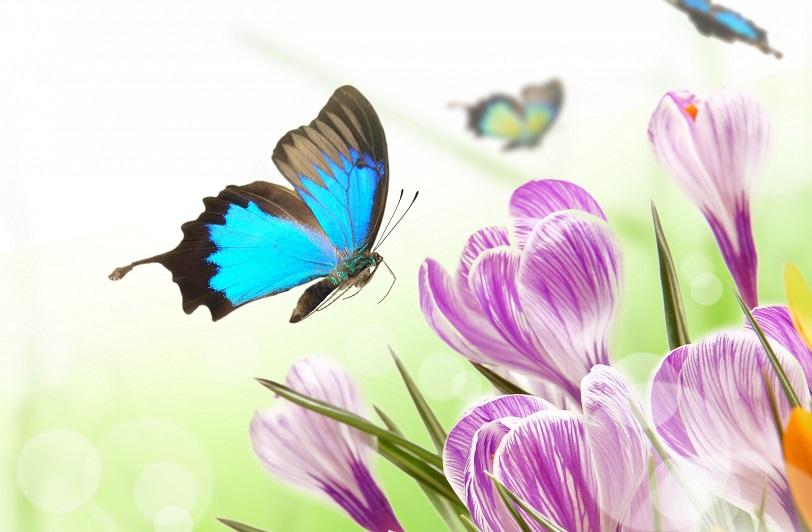 pavasaris_taureni