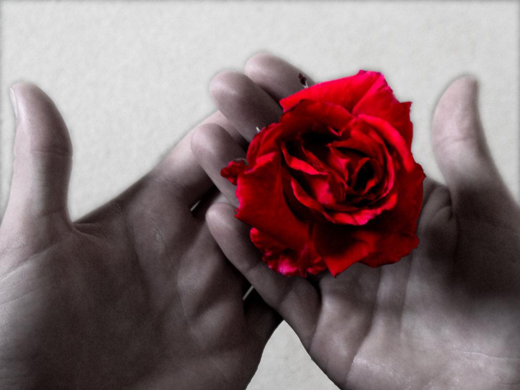 rokas_roze