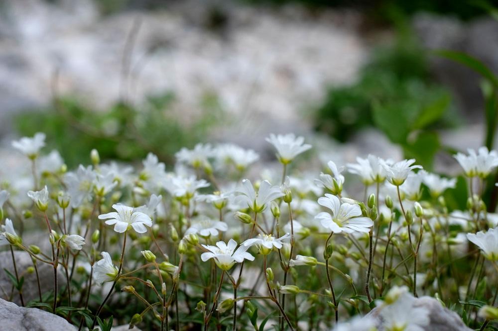 ziedi_pavasaris