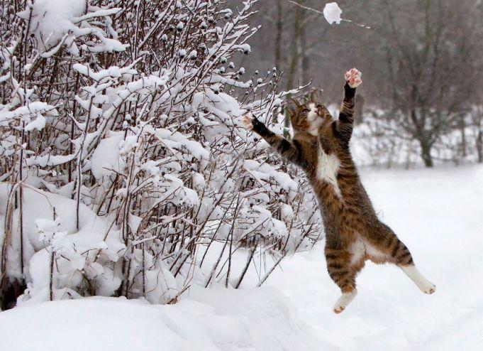 kakis_sniegs