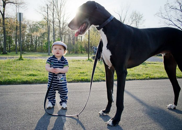 kids-with-dogs-20__700-696x497
