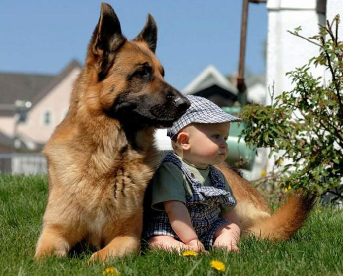 kids-with-dogs-72__700-696x559