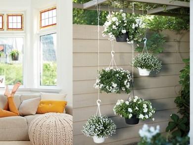 Hanging-basket-header-980x370