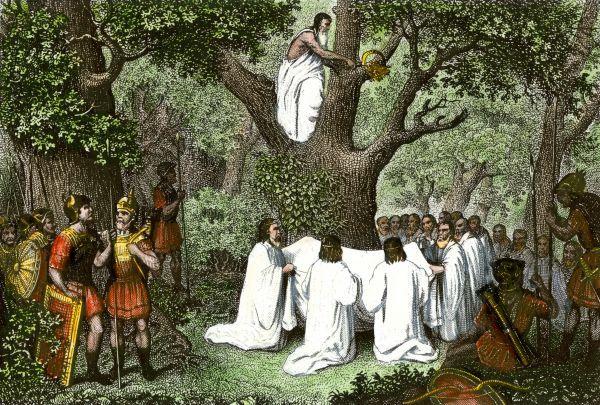 Druīdu priesteri vāc āmuļus ar zelta sirpi.