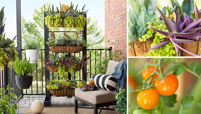 small-space-balcony-garden-102804222-hero