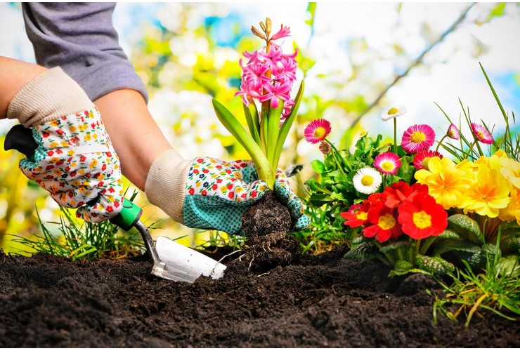 3tnbGXhZM6zgBSHv33enjRrXnRxm1Wwn-gardening-740x500